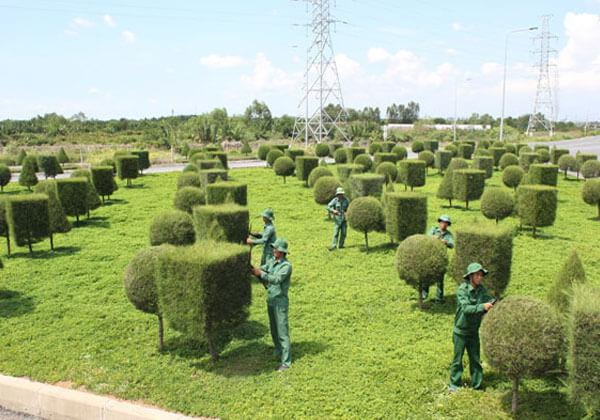 Trị bệnh cho cây cảnh, cây xanh tại TP Vinh Nghệ An
